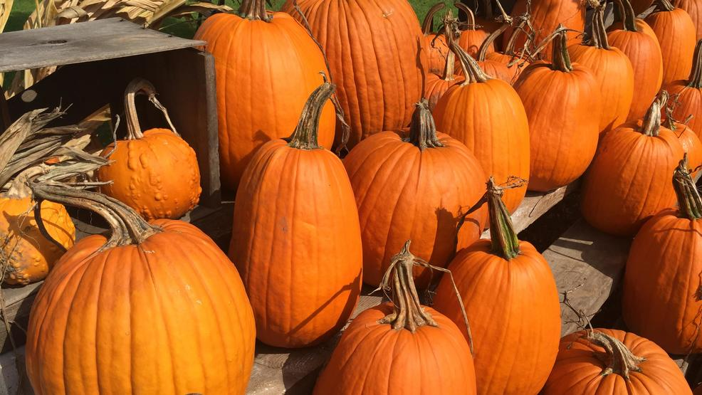 Pumpkins on display at Porter's Patch Farm in Navarino