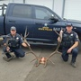 Douglas County residents criminally cited for killing bull elk