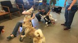 Stolen show dogs reunited with owners
