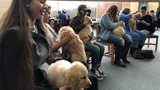 Wright State students de-stress during finals week with Fuzz Therapy
