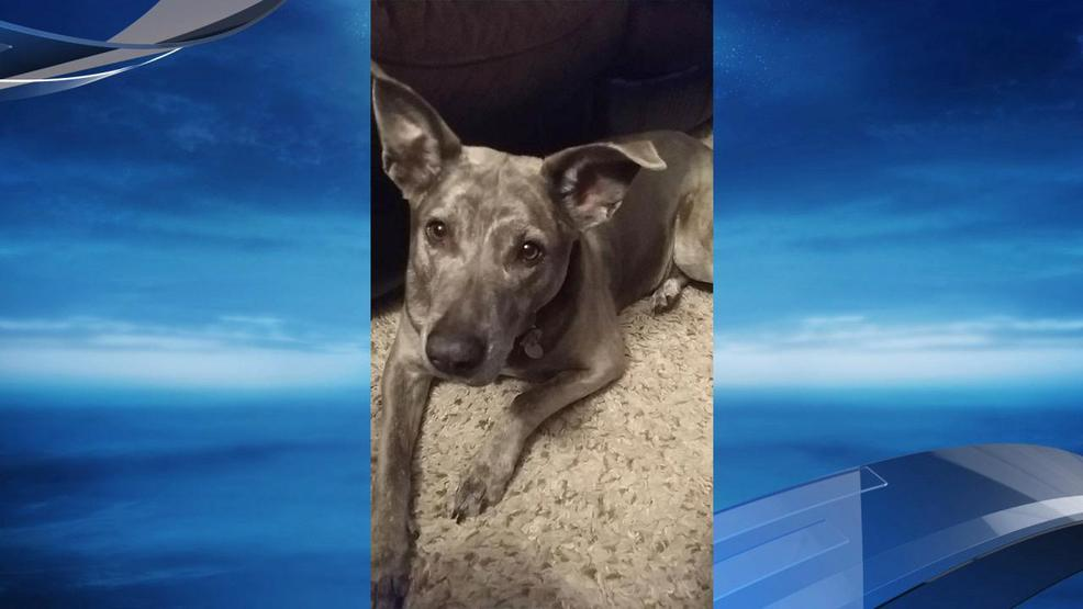 Salem boarding facility searching for 3 dogs after break for Boarding facility for dogs