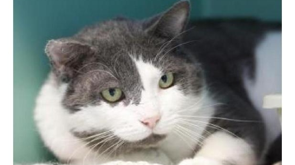 Photos: 10 adoptable cats from Seattle Humane Society