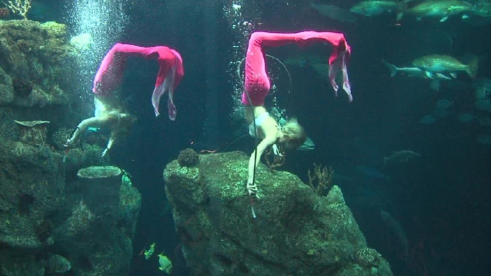 Weeki Wachee Springs - the underwater theater | Wondermondo |Weeki Wachee Weather