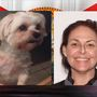Person of interest in stolen dog case