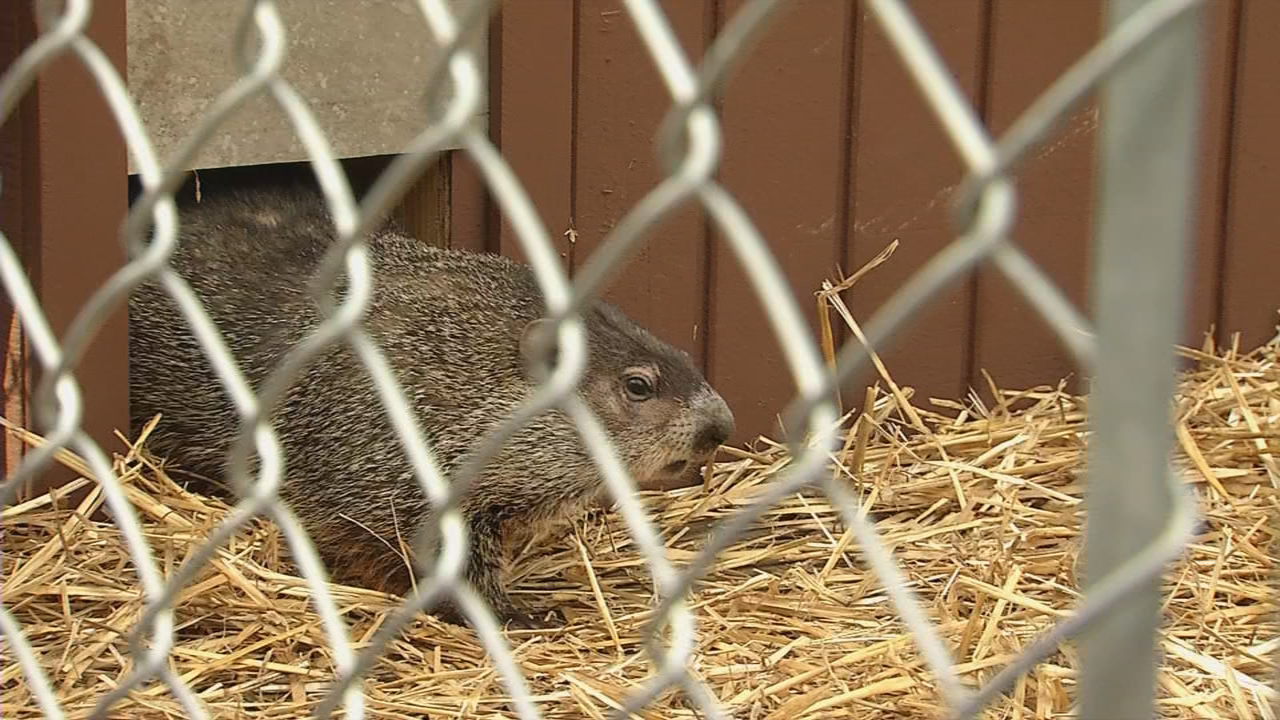 Freddie finally decides to leave his burrow--the moment everyone waits for! (WCHS/WVAH)