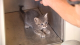 Apartment residents rescue kittens trapped in wall under mailboxes