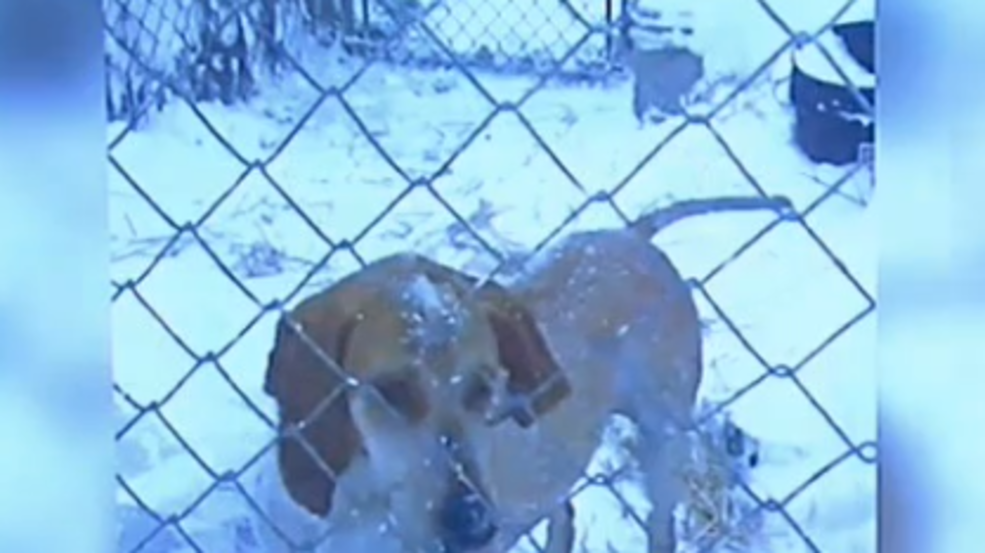 Wayne Co. Sheriff addresses viral video of dogs left out in cold