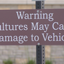 Warning: Vultures may attack your car at Caesar Creek State Park