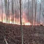Fire burns about five acres in Boone County