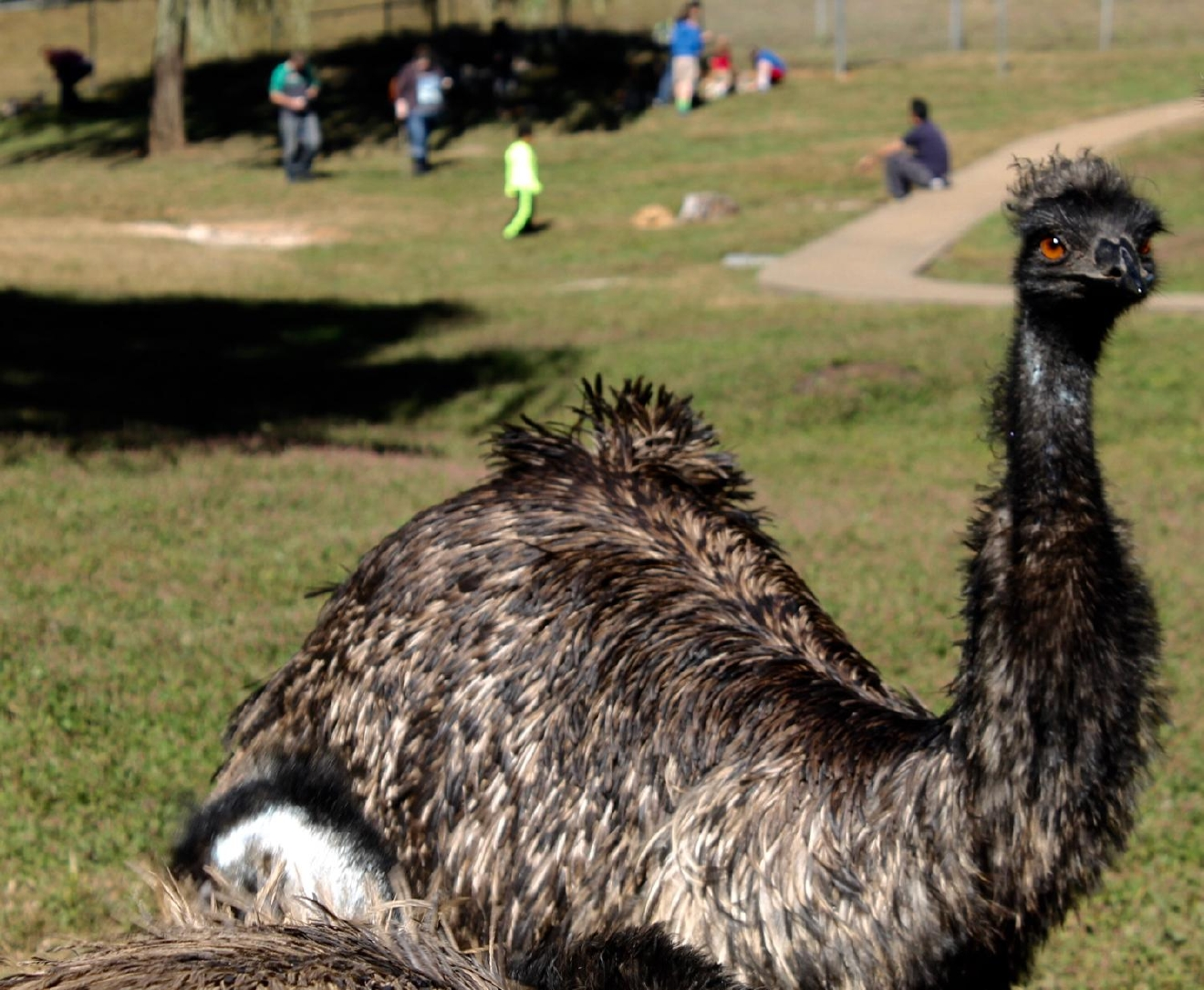 Kentucky Down Under Adventure Zoo features emus, flightless birds that can run at speeds up to 37 mph. / Image: Rose Brewington