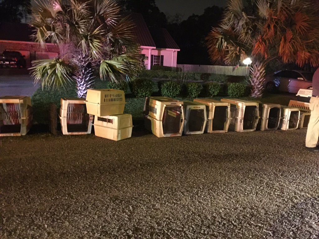Animal crates lined up outside of a Beaumont, Texas shelter after dozens of animals were killed in a shelter fire according to officials. (Photo by Tiffany Murphy KFDM)