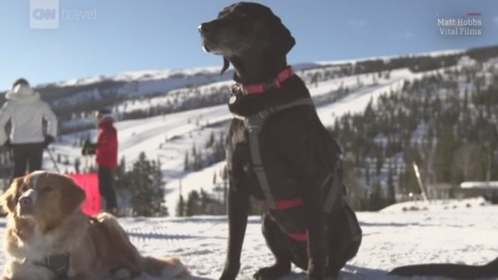 Colorado rescue dogs, skiing, avalanche dogs.JPG