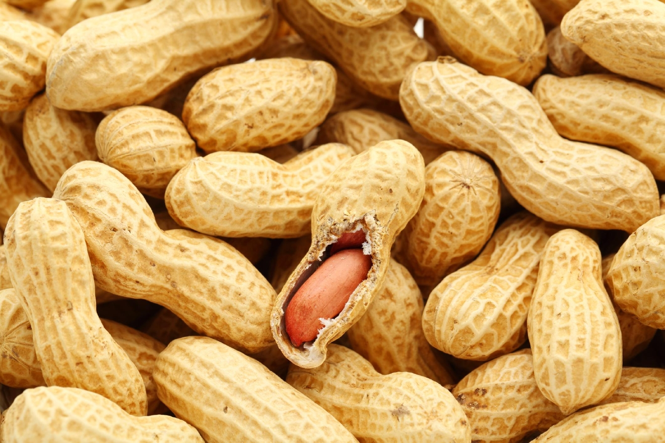 If you have an allergies to nuts, you don't want these anywhere near you. (Image: Frank Guanco)